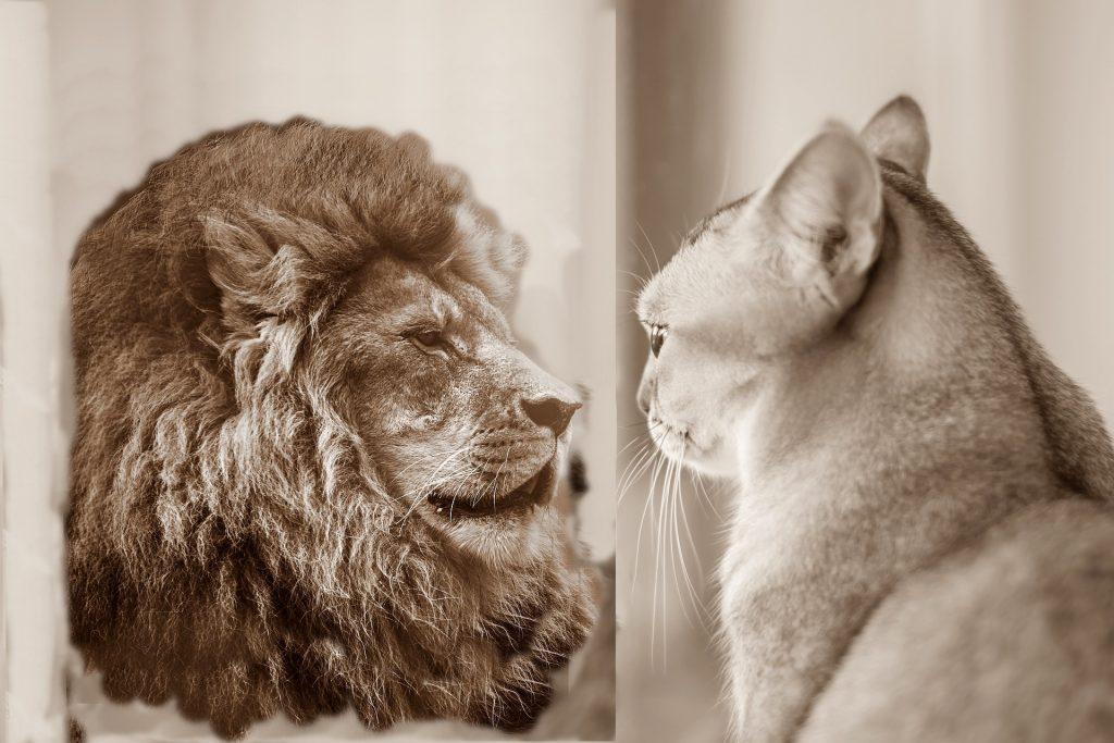 autoestima, confianza